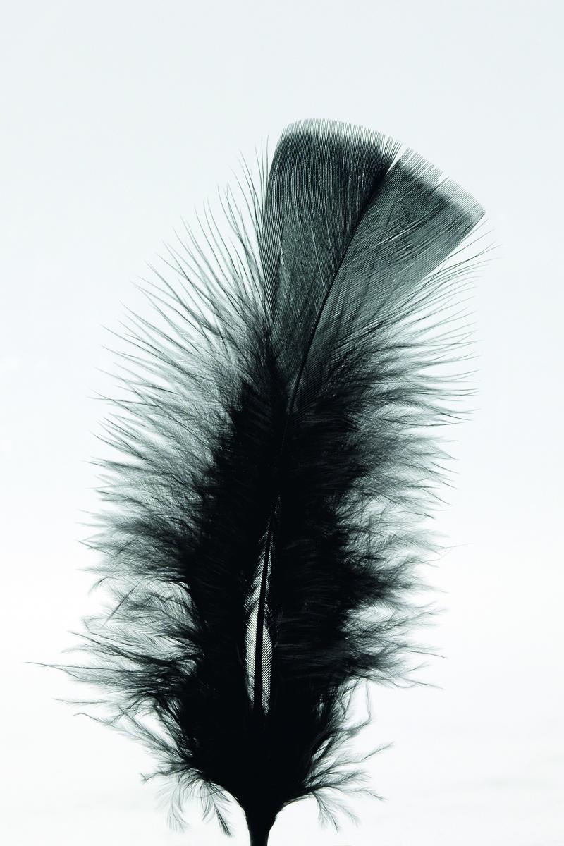 100 Stück Federn SCHWARZ, gefärbt ca.12 cm, Hühnerfedern,Basteln für Kostüme